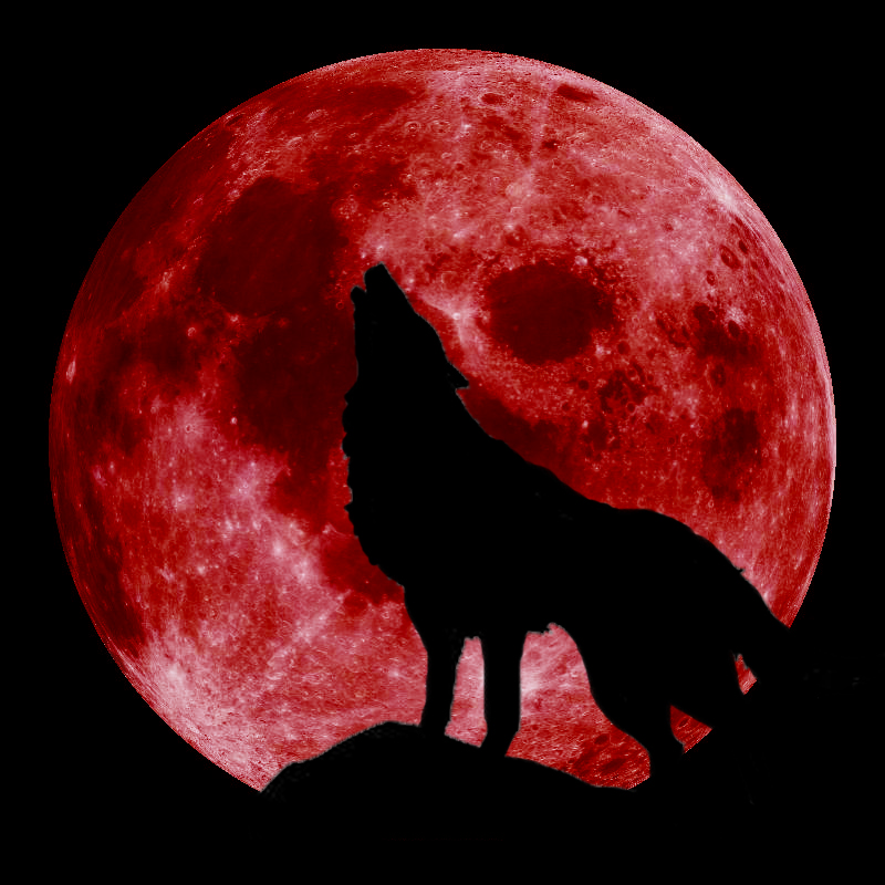 blood_moon_wolf_2_by_goldenwolf95-d6p3mrs